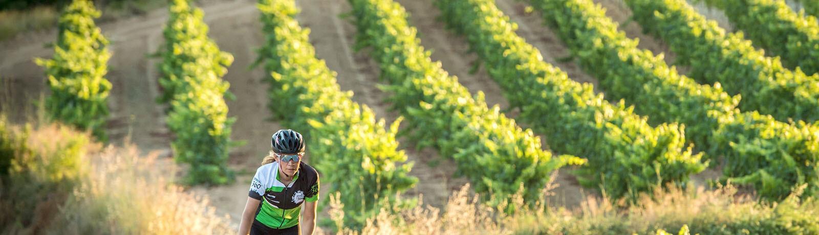Penedes around vineyards (4 days)